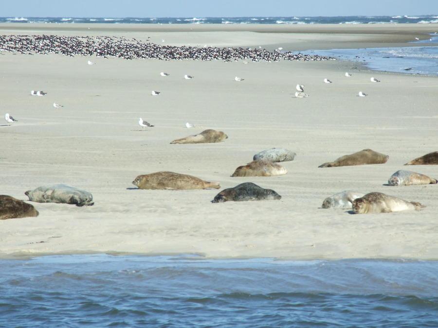 Frauenreise Segeln auf dem Ijsselmeer mit komfortablem ...