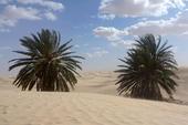 Thumb_frauenreise-kameltrekking-tunesien-palmenoase